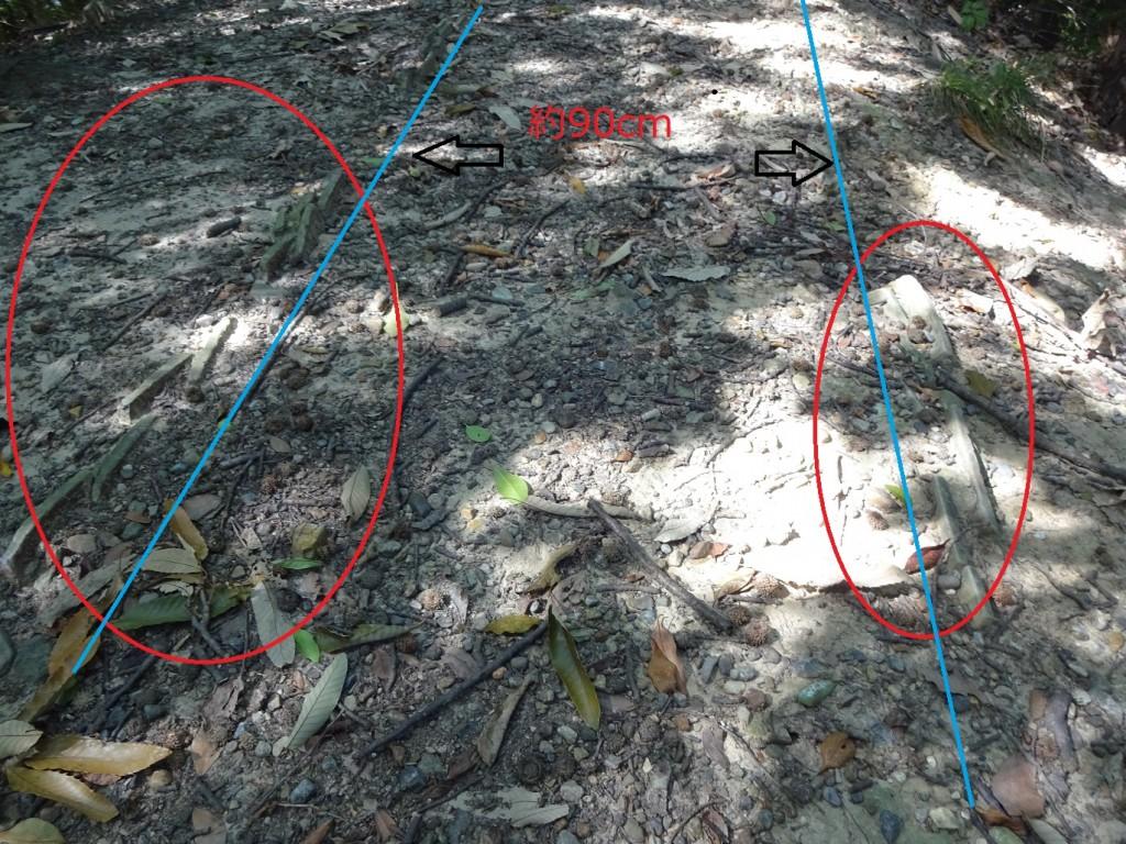 明石城東側土塁1(土塀の跡)